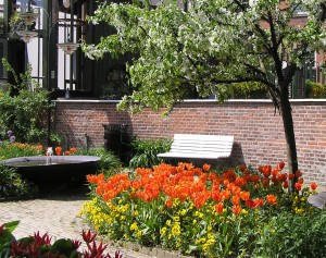 tulips-and-bench-1235370