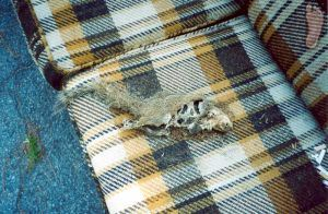 decomposing-couch-22906-m