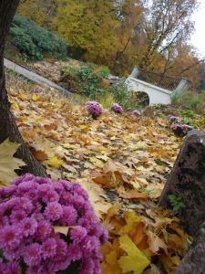 autumn-1438345-m