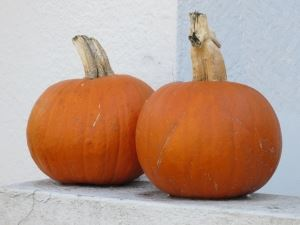 two-pumpkins-1438562-m