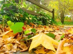 autumn-slumber-1-1496227