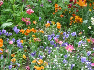 flowers-1380985