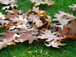autumn-carpet-1564370