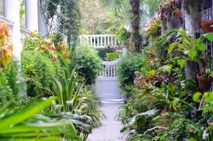 carolina-garden-path-1357826-m