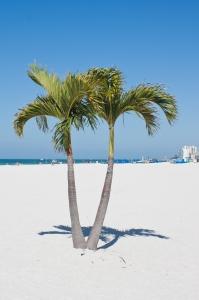beach-palms-1444596-m