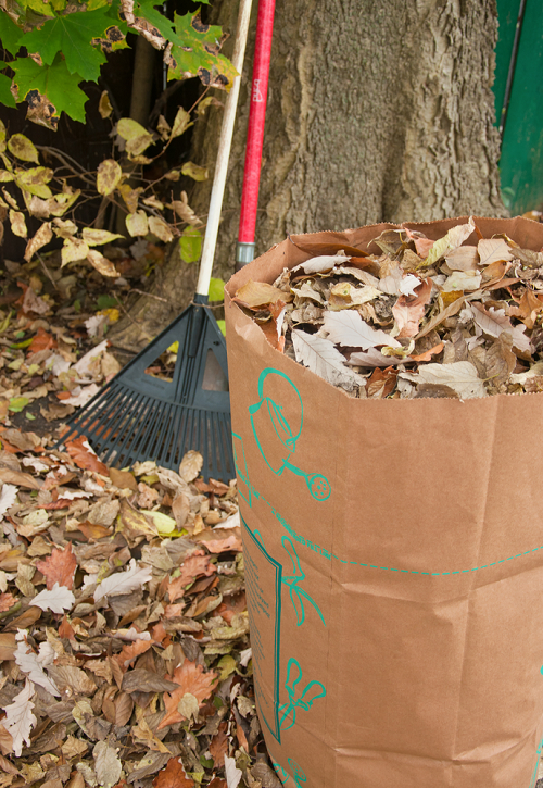 pile of leaves in a brown bag on a lawn of leaves and a rake next to a tree