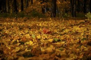 autumn-colours-1332956