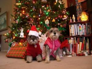 christmas-doggies-1443630