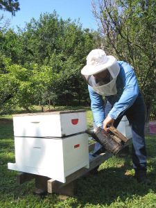 bee-keeping-2-138307-m