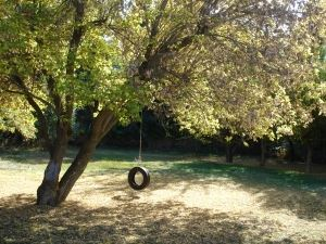 tire-swing-in-autumn-1377096-m