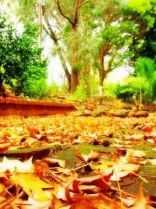 autumn-slumber-12-1506774