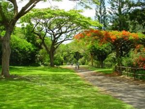 botanical-garden-1459264