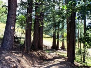 hiking-trail-1365763
