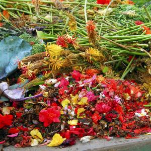 Pile of dead flowers
