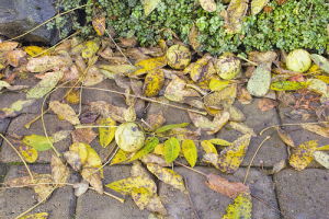 old leaves and debris