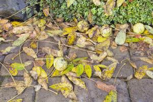 old leaves and debris