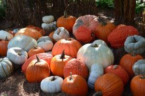 pumpkins-1347166_1280