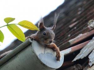 squirrel-451009_1280