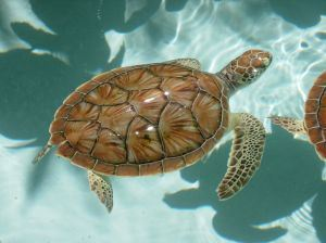baby-sea-turtles-424620-m