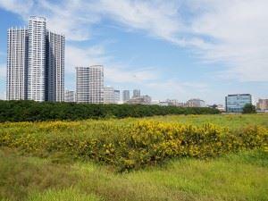 real-estate-1739189_1280