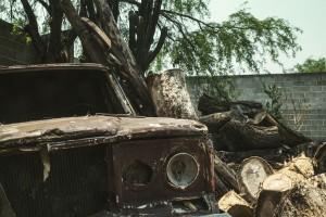 abandoned-bark-branch-1001487