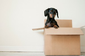 Moving-out-image2-unsplash