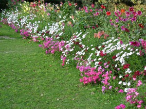flower-bed-1527155
