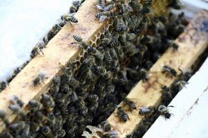 bees-1015702-m