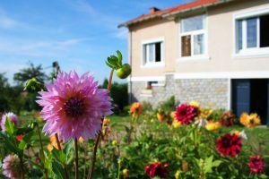 mammies-garden-1-866137-m